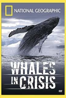 Image of Whales in Crisis