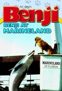 Image of Benji at Marineland