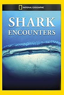 Image of Shark Encounters